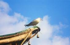 海鷗的遠方圖片