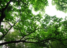 苏州穹窿山风景图片