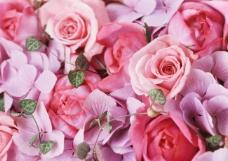 浪漫玫瑰背景墙