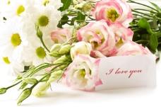 鲜花高清图片
