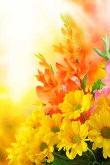 温馨菊花背景图片下载
