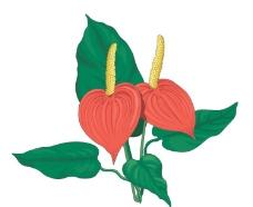 花卉矢量图片