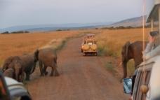 大象近距离图片
