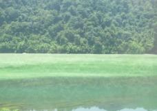 山水一线 天然绿景图片