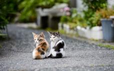 两只可爱猫咪