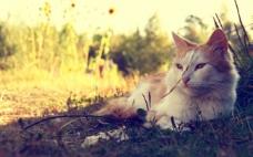 阴凉下的猫咪