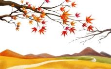 秋天枫树红叶枫叶山