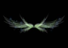 透明翅膀图片
