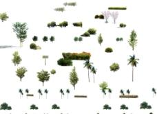 各种树木 园林装饰图片