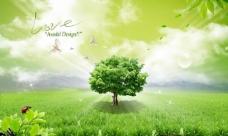 草地上的白鸽与大树图片