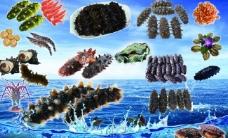 海参素材图片