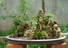 水旱盆景图片