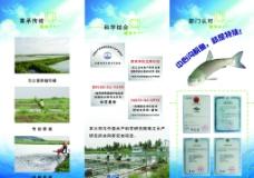 中心沟水产折页图片