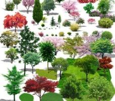 效果图后期植物psd分层素材图片