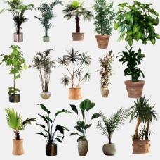 盆栽 植物 绿化