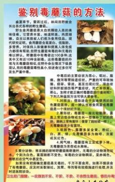 蘑菇的鉴别方法图片