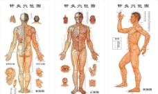 针灸图图片