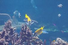 水下鱼图片