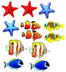 鱼 海星图片