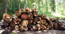 原木材图片